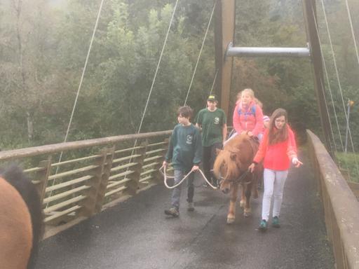 Mit dem Pony unterwegs, Reussdelta