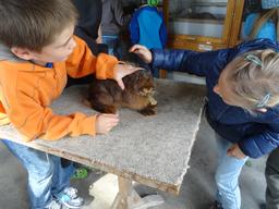 Kleintierzüchter 2016
