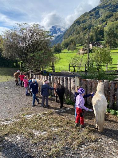 Ein Morgen in der Pferdepension 2020